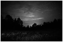 Grasses, pine forest at night. Wind Cave National Park, South Dakota, USA. (black and white)