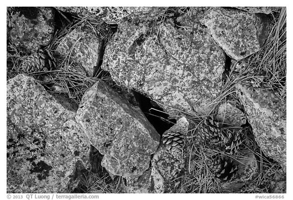 Limestone rock and ponderosa pine cones. Wind Cave National Park (black and white)
