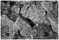 Limestone rock and ponderosa pine cones. Wind Cave National Park ( black and white)