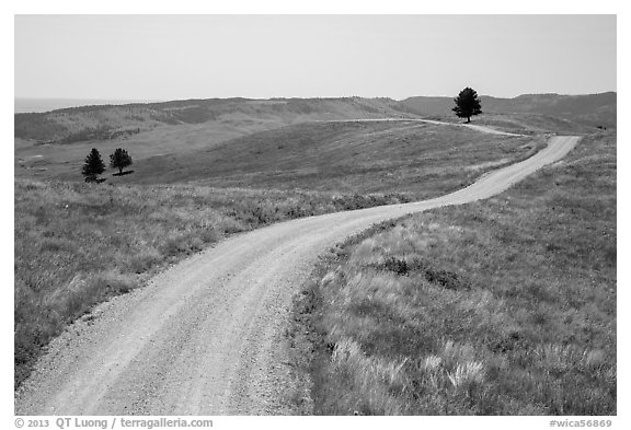 Unpaved road. Wind Cave National Park (black and white)