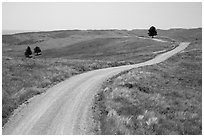 Unpaved road. Wind Cave National Park, South Dakota, USA. (black and white)