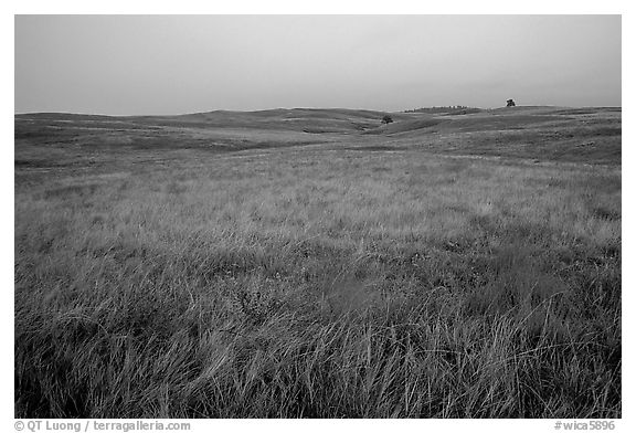 Tallgrass prairie. Wind Cave National Park (black and white)