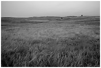 Tallgrass prairie. Wind Cave National Park, South Dakota, USA. (black and white)