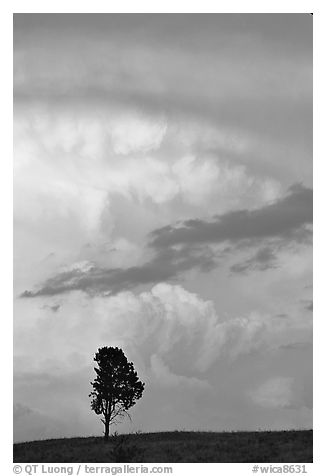 Lone tree and storm cloud, sunset. Wind Cave National Park (black and white)