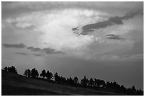 Row of trees under a storm cloud at sunset. Wind Cave National Park ( black and white)