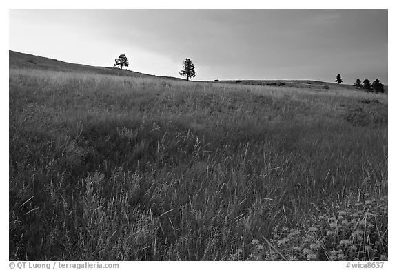 Tall grass and hills at Bison Flats, sunrise. Wind Cave National Park (black and white)