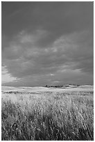 Prairie with tall grasses and dark sky, early morning. Wind Cave National Park, South Dakota, USA. (black and white)