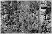 Limestone cliff. Wind Cave National Park, South Dakota, USA. (black and white)