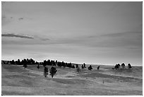 Rolling hills covered with scattered pines, dusk. Wind Cave National Park, South Dakota, USA. (black and white)