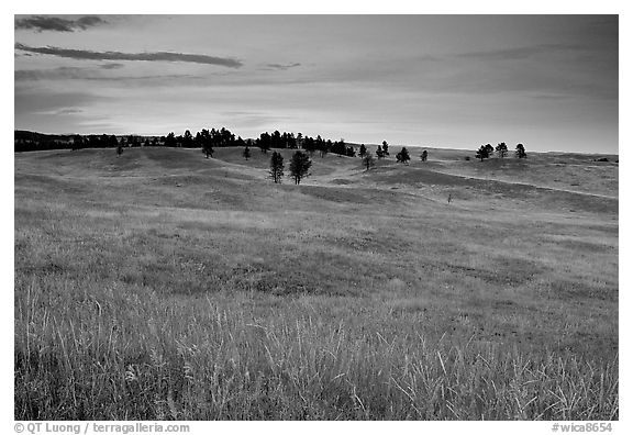 Rolling hills covered with grasses and scattered pines, dusk. Wind Cave National Park (black and white)
