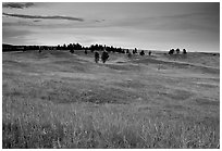 Rolling hills covered with grasses and scattered pines, dusk. Wind Cave National Park ( black and white)