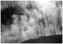 Trees shadowed in thermal steam, Upper geyser basin. Yellowstone National Park, Wyoming, USA. (black and white)