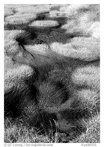 Grasses and stream. Yellowstone National Park (black and white)