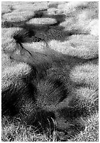 Grasses and stream. Yellowstone National Park, Wyoming, USA. (black and white)