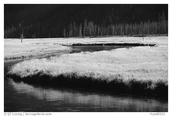 Yellowstone River and meadow in fall. Yellowstone National Park (black and white)