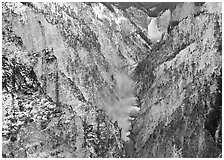 Grand Canyon of Yellowstone and Lower Falls with snow dusting. Yellowstone National Park, Wyoming, USA. (black and white)