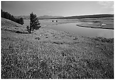 Meadow and bend of the Yellowstone River, Hayden Valley. Yellowstone National Park, Wyoming, USA. (black and white)