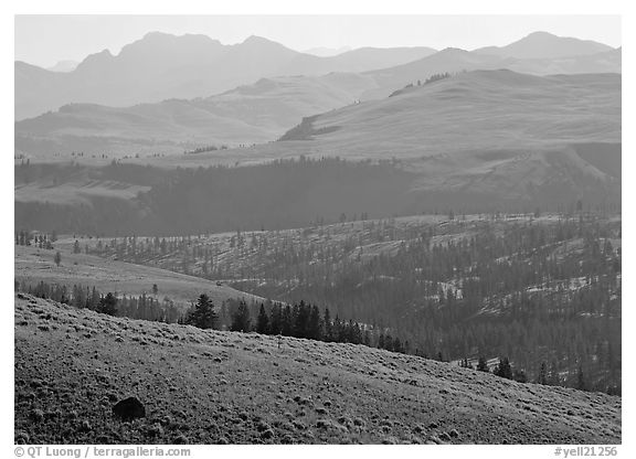 Absaroka Range from Dunraven Pass, early morning. Yellowstone National Park (black and white)