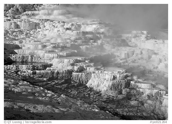 Minerva travertine terraces and steam, Mammoth Hot Springs. Yellowstone National Park (black and white)