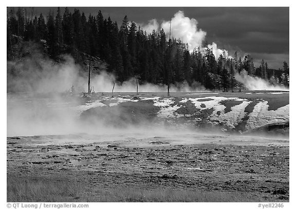 Fumeroles and forest in Upper Geyser Basin. Yellowstone National Park, Wyoming, USA.