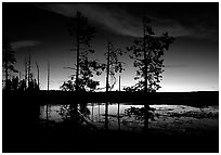 Trees near Fountain Paint Pot at sunset. Yellowstone National Park, Wyoming, USA. (black and white)