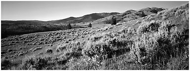 Gentle slopes covered with summer wildflower. Yellowstone National Park (Panoramic black and white)
