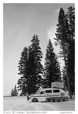 Snowcoach and trees. Yellowstone National Park (black and white)