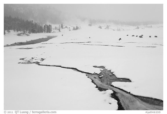 Winter landscape with thermal run-off. Yellowstone National Park (black and white)