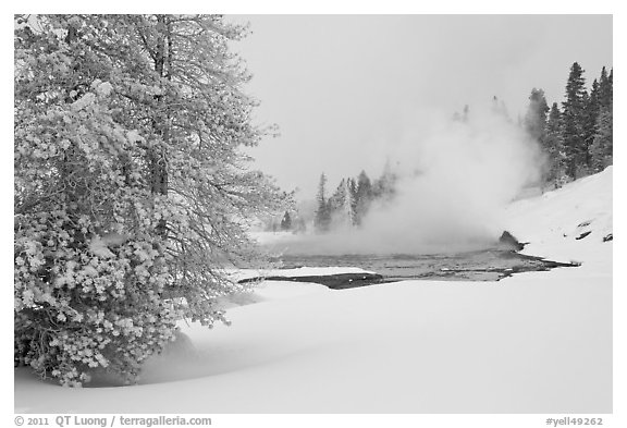 Snowy landscape with distant thermal pool. Yellowstone National Park (black and white)