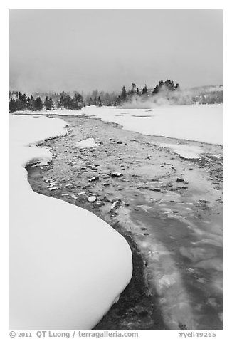 Thermal run-off stream contrasts with snowy landscape. Yellowstone National Park (black and white)