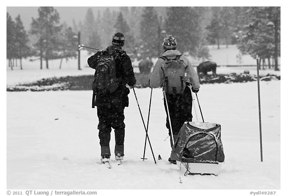 Skiers and bisons. Yellowstone National Park (black and white)