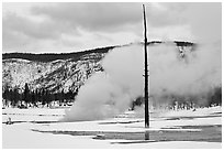 Tree skeleton and thermal steam, Biscuit Basin. Yellowstone National Park, Wyoming, USA. (black and white)