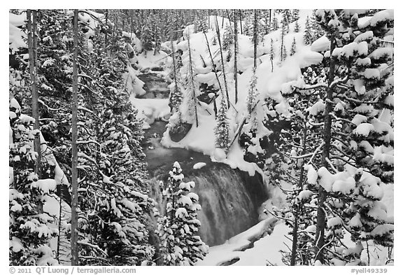 Snowy forest and Kepler Cascades. Yellowstone National Park (black and white)