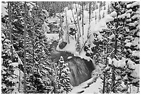 Snowy forest and Kepler Cascades. Yellowstone National Park ( black and white)