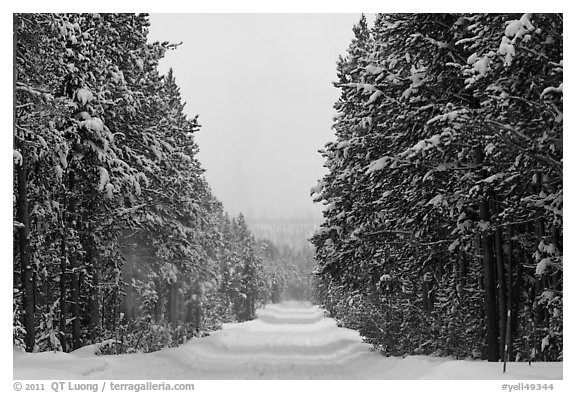 Snow-covered road. Yellowstone National Park (black and white)