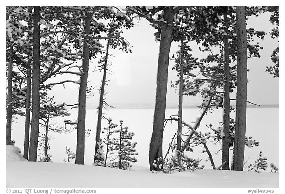 Trees on edge of Lewis Lake in winter. Yellowstone National Park (black and white)