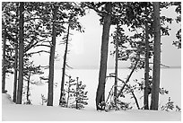 Trees on edge of Lewis Lake in winter. Yellowstone National Park ( black and white)