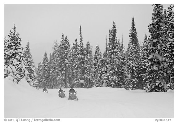 Snowmobiling on snowy day. Yellowstone National Park (black and white)