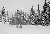 Snowmobiling on snowy day. Yellowstone National Park, Wyoming, USA. (black and white)