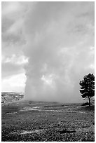 Steam column from Old Faithful Geyser. Yellowstone National Park, Wyoming, USA. (black and white)