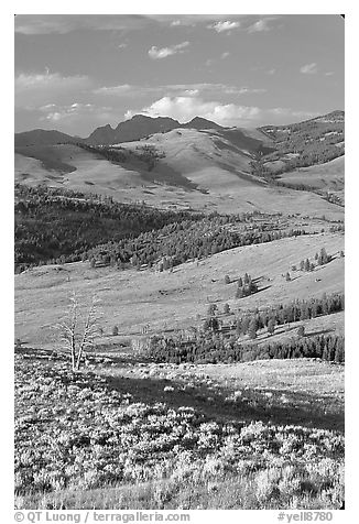 Hills from Specimen ridge, late afternoon. Yellowstone National Park (black and white)