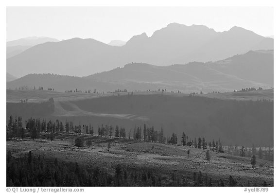 Backlit ridges of Absaroka Range from Dunraven Pass, early morning. Yellowstone National Park, Wyoming, USA.