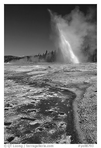 Daisy Geyser erupting at an angle. Yellowstone National Park (black and white)