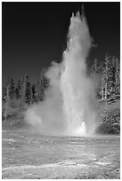 Grand Geyser,  tallest of the regularly erupting geysers in the Park. Yellowstone National Park, Wyoming, USA. (black and white)