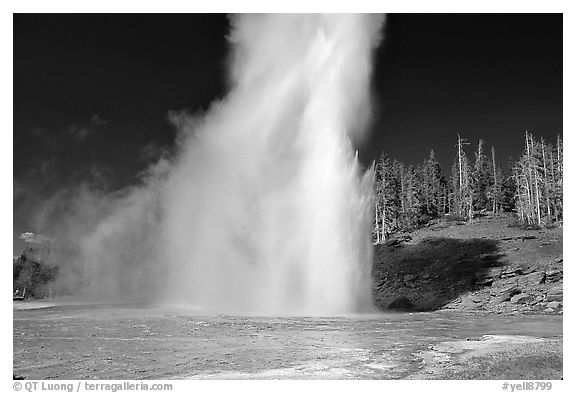 Black and white picture photo grand geyser eruption afternoon yellowstone national park