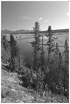 Trees and bend of the Yellowstone River, Hayden Valley. Yellowstone National Park, Wyoming, USA. (black and white)