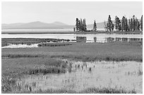Grasses and Yellowstone Lake near Stemboat Point, morning. Yellowstone National Park ( black and white)