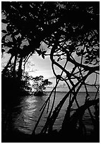 Biscayne Bay viewed through mangal at edge of water, sunset. Biscayne National Park, Florida, USA. (black and white)