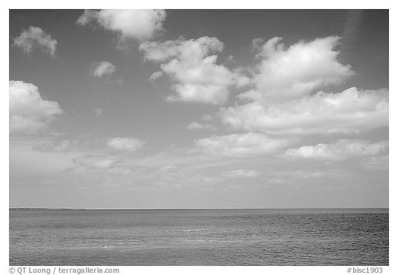 Sky and Elkhorn coral reef. Biscayne National Park (black and white)