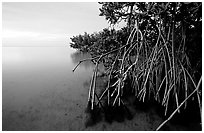 Mangal on Elliott Key, sunset. Biscayne National Park, Florida, USA. (black and white)